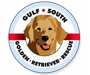 gulf-south-golden-retriever-rescue